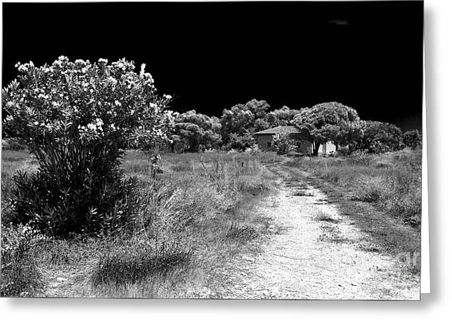 Where The Path Leads Greeting Card by John Rizzuto