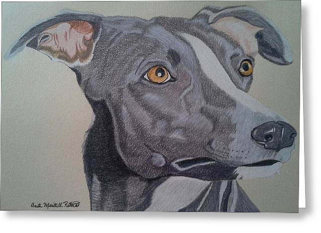 Whippet - Grey And White Greeting Card
