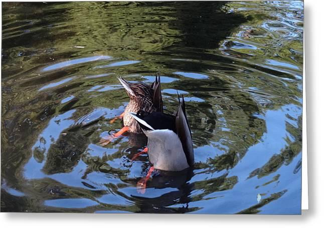 Whirlpool Greeting Card by Lizbeth Bostrom