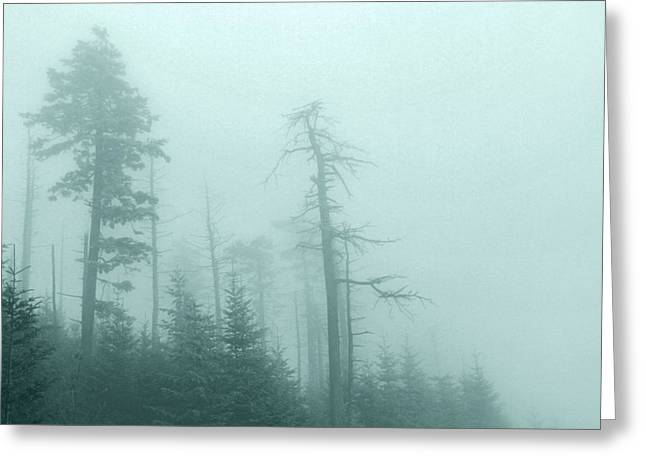 Whisper In The Woods Greeting Card by Dan Sproul