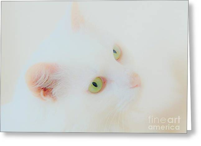 Whisper White Greeting Card by Judy Via-Wolff