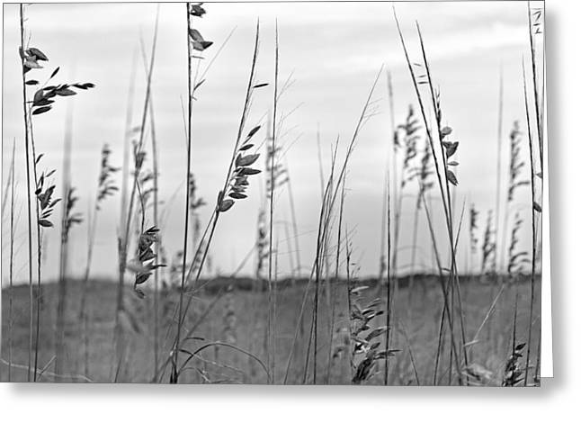 Whispering Sea Oats Bw Greeting Card