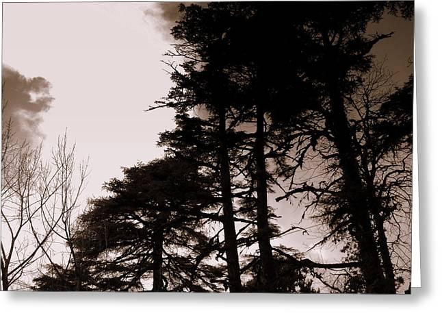 Whispering Trees Greeting Card by Salman Ravish