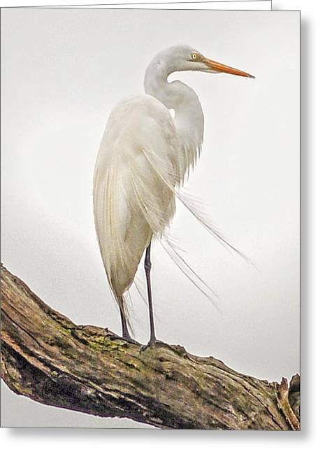 Whispering Wind Greeting Card by Donnie Smith