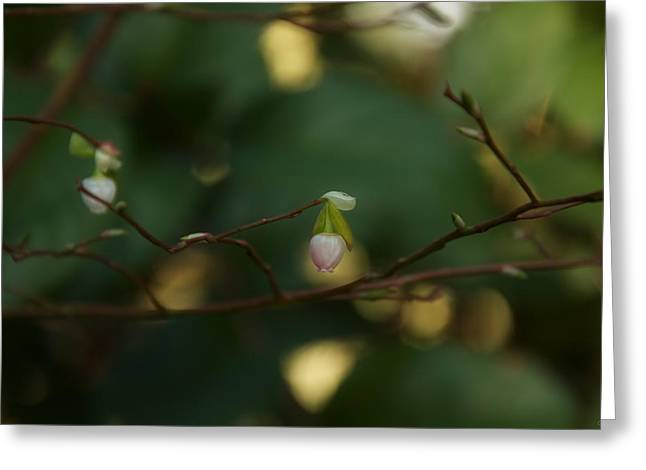 Greeting Card featuring the photograph Whispers Of Spring In The Tranquil Forest by Lisa Knechtel