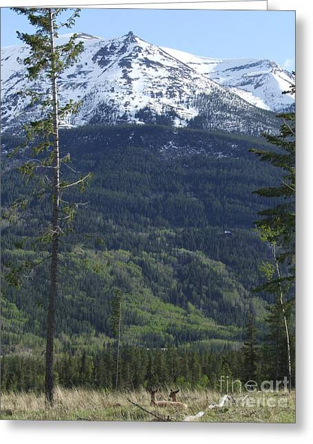 Greeting Card featuring the photograph Whistler - Jasper - Canada by Phil Banks