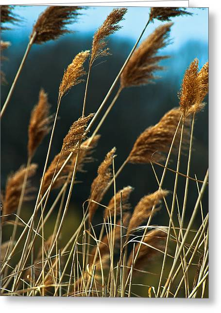 Whistling Wind Greeting Card by Mike Feraco