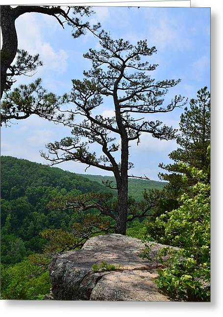 Whitaker Point Trail Greeting Card