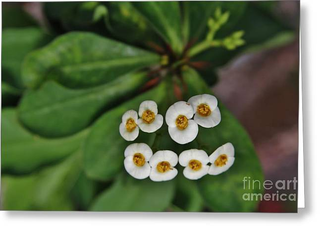 White 8 Greeting Card by Butch Phillips