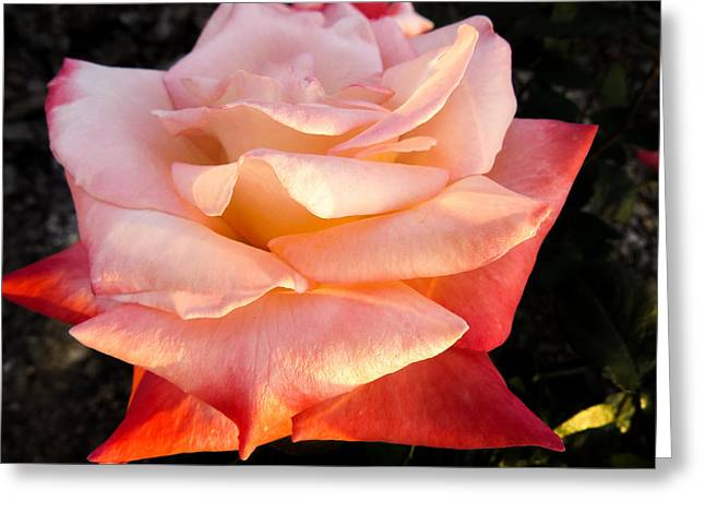 White And Peach Greeting Card by Zina Stromberg