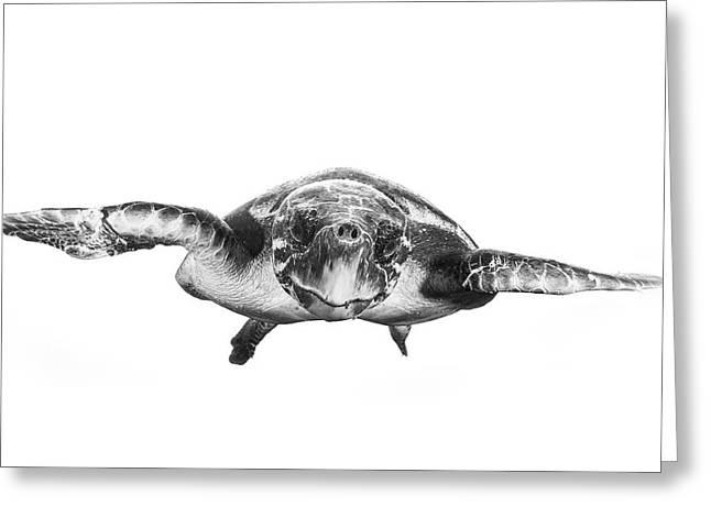 White And Turtle Greeting Card