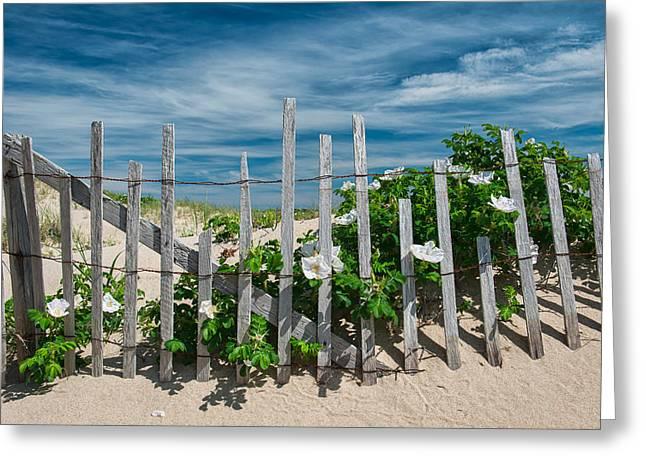 White Beach Roses Greeting Card