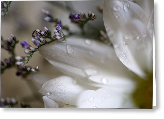 White Beauty Greeting Card by John Holloway