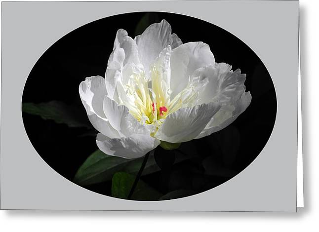 White Beauty Greeting Card by Yue Wang