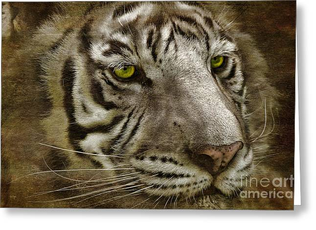 White Bengal Greeting Card by Lois Bryan
