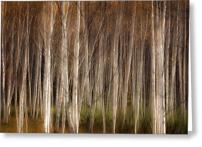 White Birch Abstract Greeting Card by John Vose