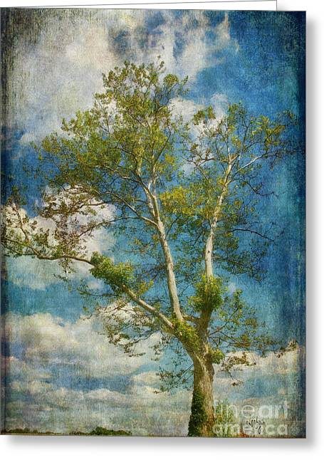 White Birch In May Greeting Card by Lois Bryan