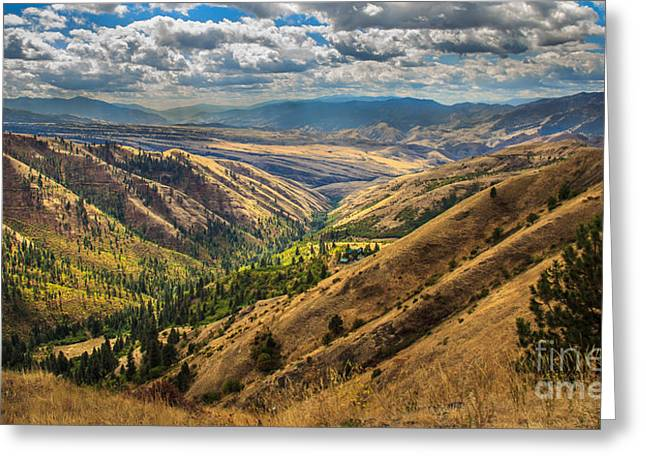 White Bird Hill View Greeting Card by Robert Bales