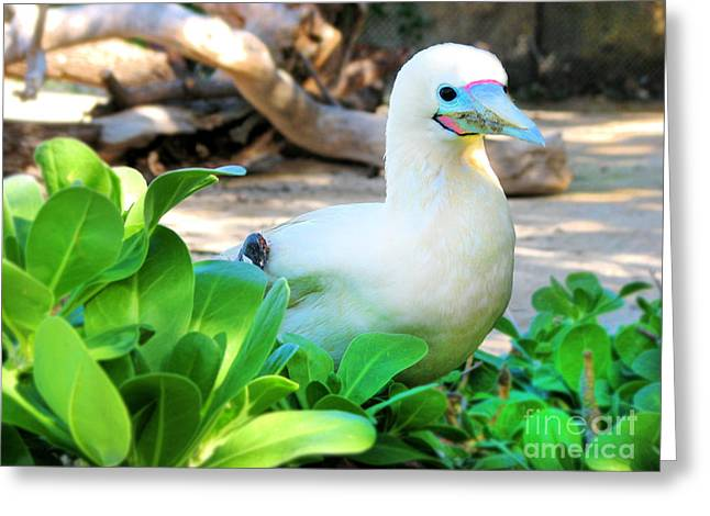Greeting Card featuring the photograph White Bird by Kristine Merc