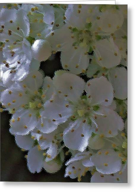 White Blooms Greeting Card