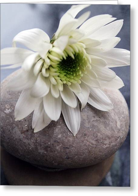 White Blossom On Rocks Greeting Card by Linda Woods