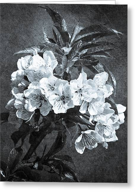 White Blossoms - Black And White Greeting Card