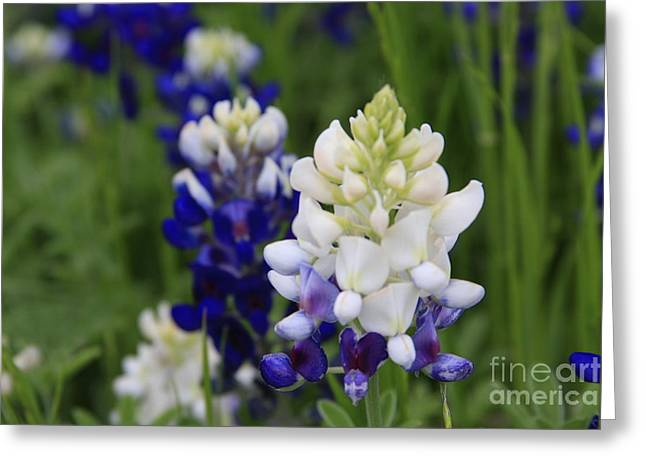 White Bluebonnet Greeting Card by Jerry Bunger