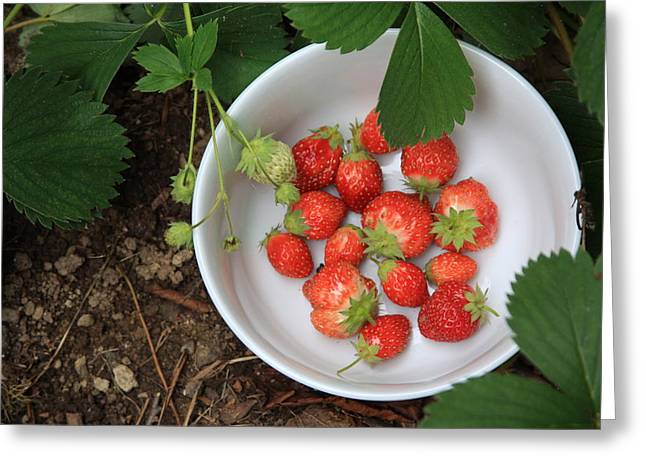 White Bowl With Strawberries Greeting Card