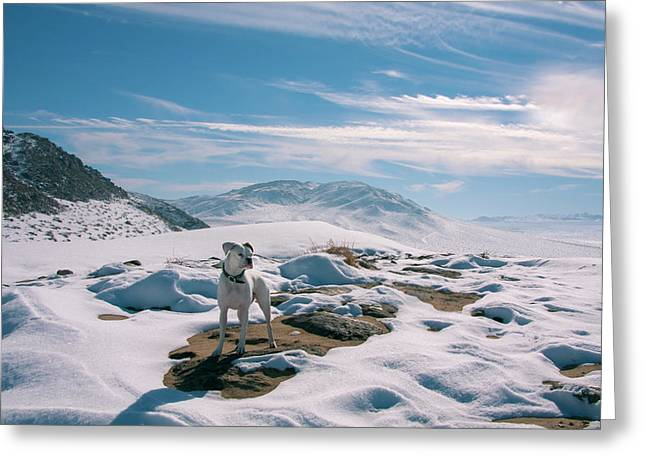 White Boxer In Snow Greeting Card