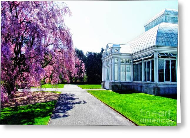 White Building And Blooming Tree Greeting Card by Nishanth Gopinathan
