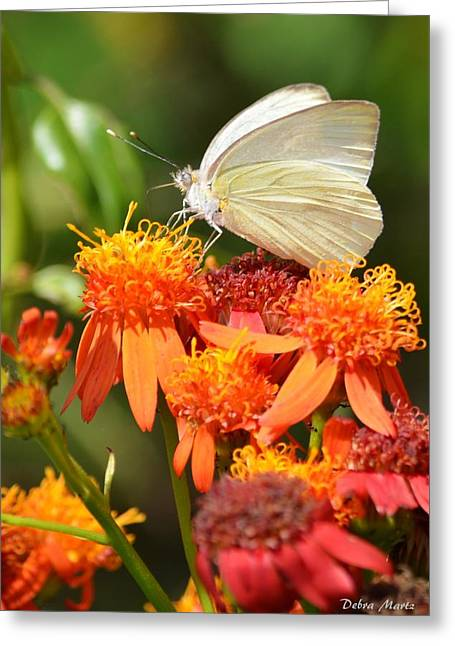 Greeting Card featuring the photograph White Butterfly On Mexican Flame by Debra Martz