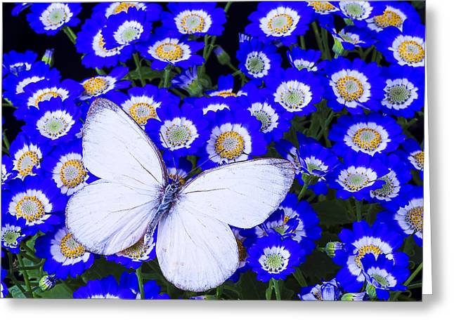 White Butterfly In Blue Flowers Greeting Card by Garry Gay