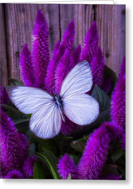 White Butterfly On Flowering Celosia Greeting Card by Garry Gay