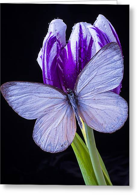 White Butterfly On Purple Tulip Greeting Card by Garry Gay