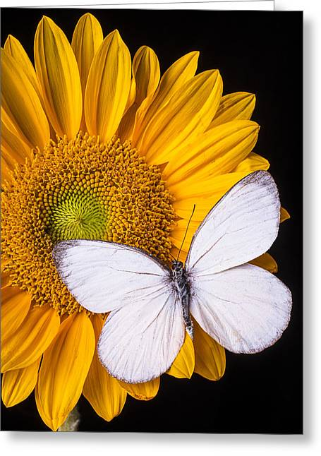 White Butterfly On Sunflower Greeting Card by Garry Gay