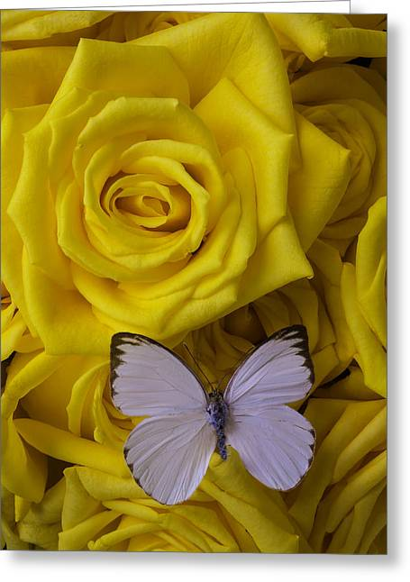 White Butterfly Resting Greeting Card by Garry Gay