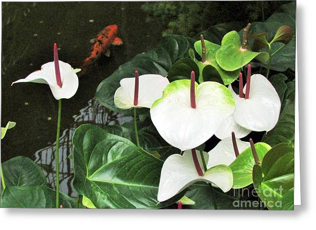 White Calla Lilies Greeting Card by Nancy Rucker