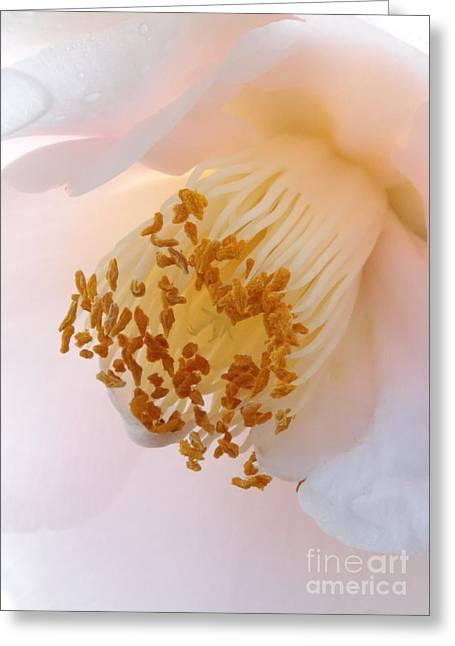 White Camellia Closeup Greeting Card by Carol Groenen