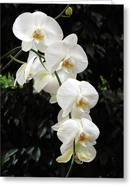 White Cascade Greeting Card