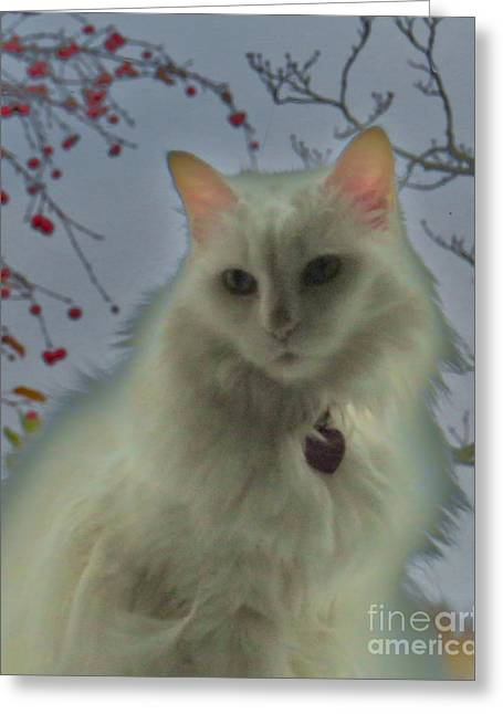 White Cat Dreams Greeting Card
