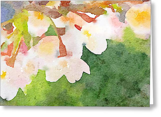 White Cherry Blossoms Digital Watercolor Painting 2 Greeting Card