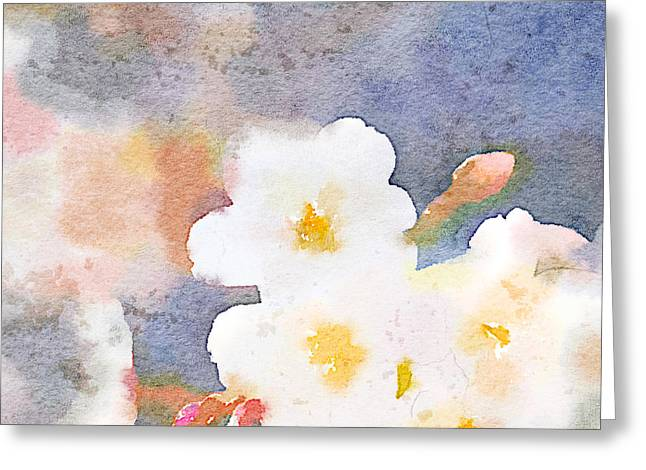 White Cherry Blossoms Digital Watercolor Painting 3 Greeting Card