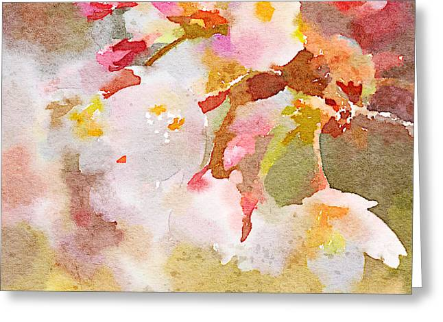 White Cherry Blossoms Digital Watercolor Painting 4 Greeting Card