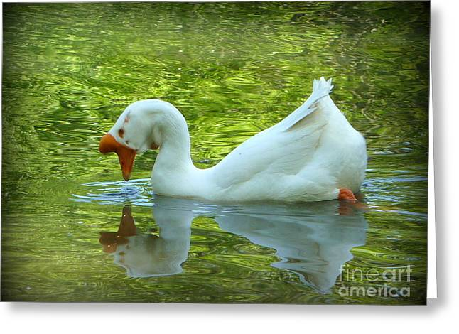 White Chinese Goose Curtsy  Greeting Card