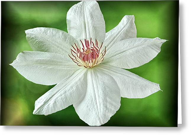 Greeting Card featuring the photograph White Clematis by Richard Farrington