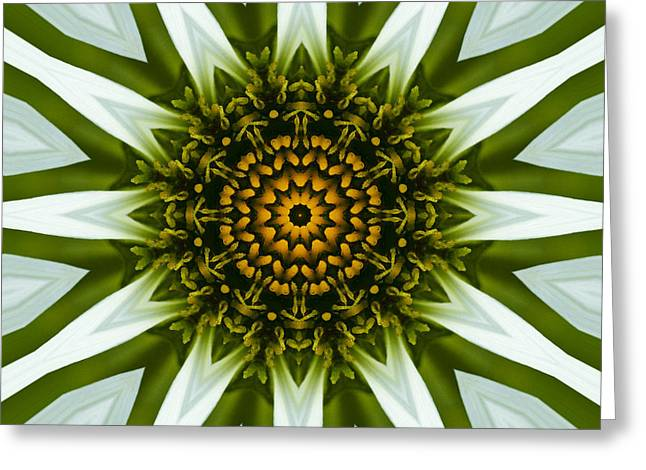 White Coneflower Mandala 12 Greeting Card by Carrie Cranwill