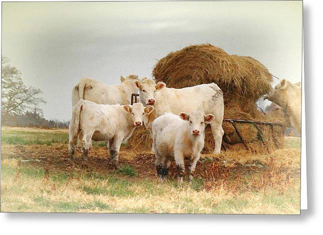 White Cows Greeting Card by Bonnie Willis