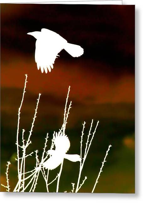 White Crow And The Bluejay Greeting Card