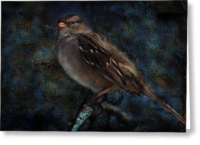 White-crowned Sparrow Greeting Card by Barbara Manis