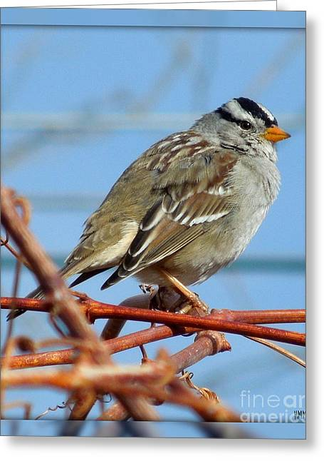 Greeting Card featuring the photograph White Crowned Sparrow by Heidi Manly